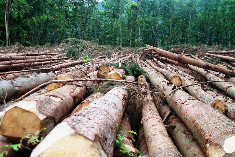 are-efficient-stoves-halt-deforestation_16[1]
