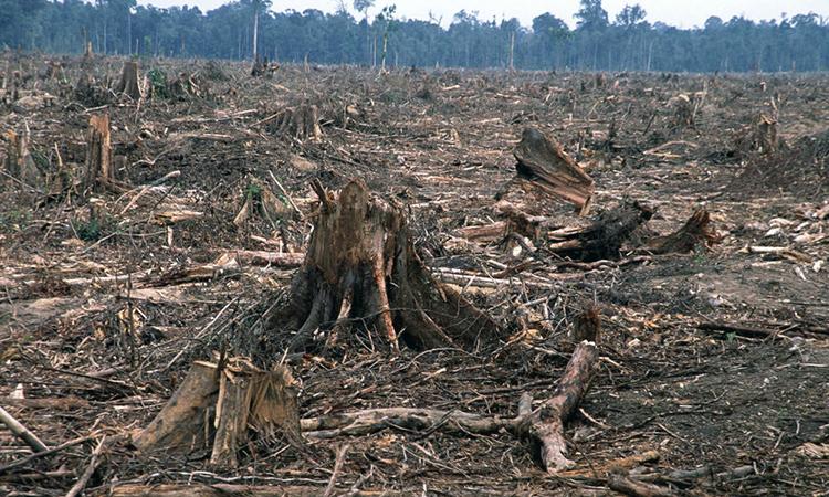 deforestation_2_750[1]