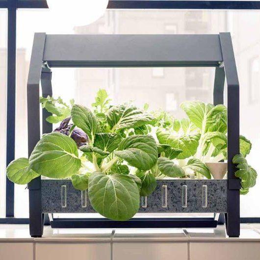 Gewächshaus Wohnung ikea verkauft hydrokulturgärten die ihnen den anbau gemüse in