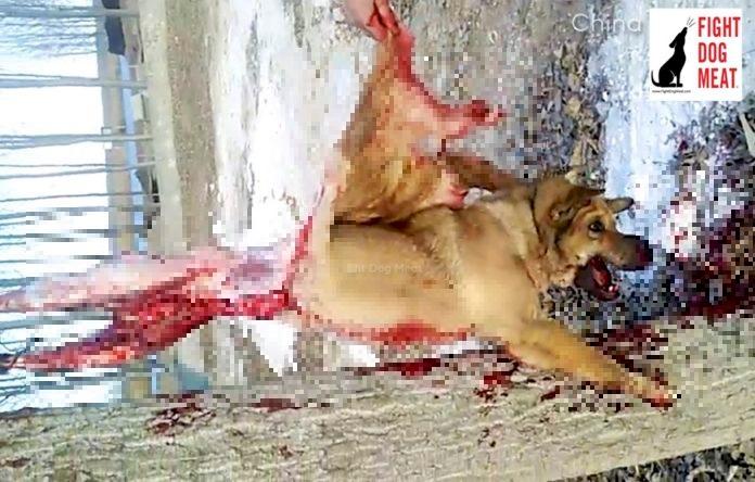 Grausames Video An Baum Gebundener Hilfloser Hund Heult Vor