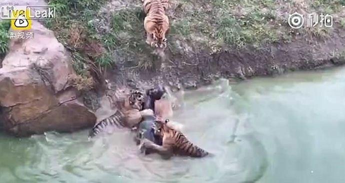Grausames Video: Besuchern stockt vor Schreck der Atem ...