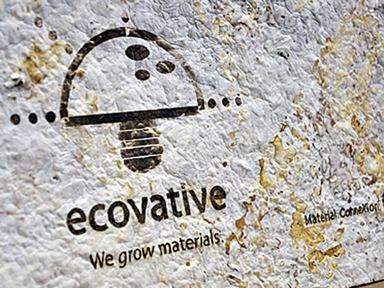 ecovative-b4-jpg__750x562_q85_crop_subsampling-2_upscale